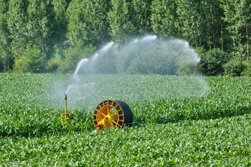 Podlewanie w kukurydzanym polu w Proissans w Perigord zdjęcia stock