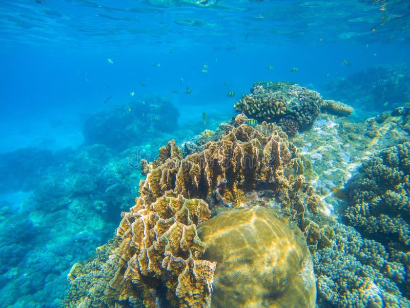 Podmorski krajobraz z rafy koralowa różnorodnością Oceaniczna przyroda w egzotycznym wyspy seashore obrazy stock
