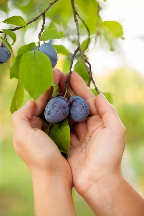 Podnosi twój perfect owoc obrazy stock