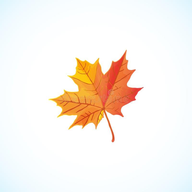 podobieństwo liści jesienią rozmiaru xxxl Jesień liść klonowy odizolowywający na białej tło wektoru ilustraci royalty ilustracja