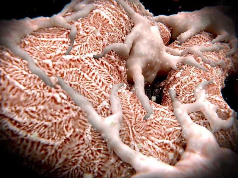 Podocytes na glomerulus filtruje krew royalty ilustracja