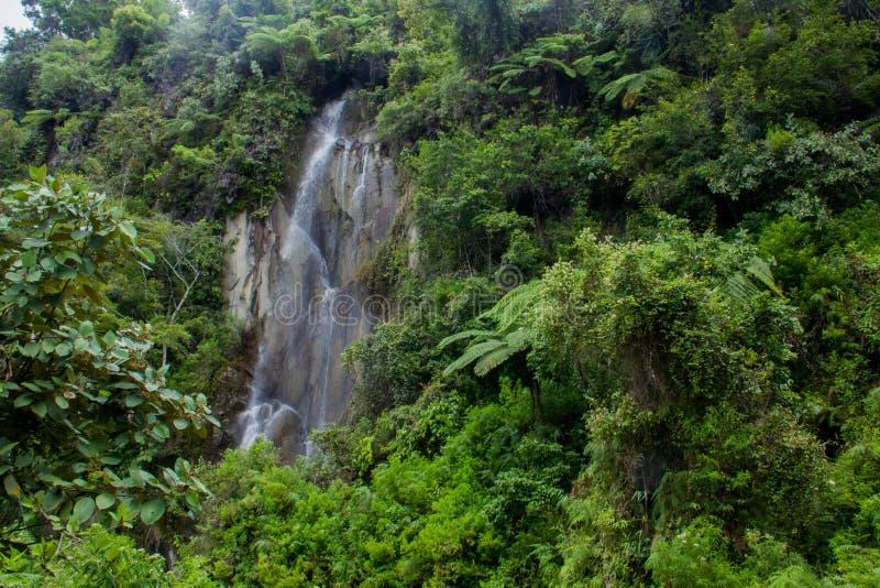 Podophylla för ormbunketrädCyathea i skog av den Samosir ön, Medan, Indonesien arkivbild
