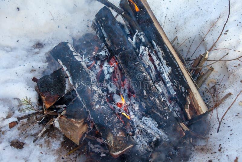 podpala w zima lesie w śniegu brzozy drewno obraz stock