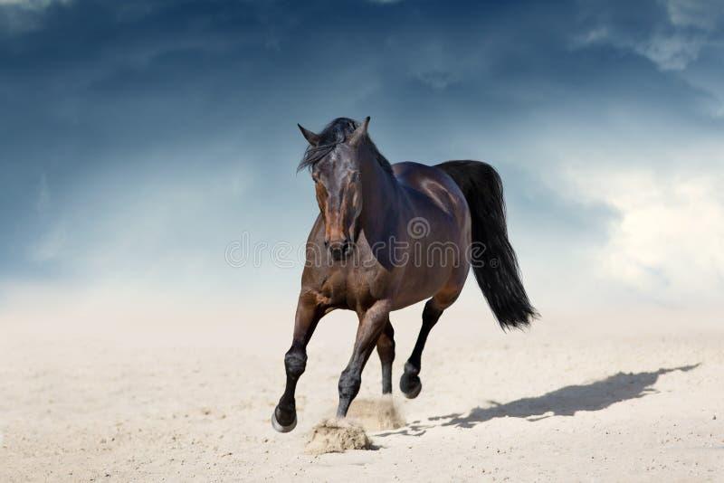 Podpalanego konia kłusować obraz royalty free