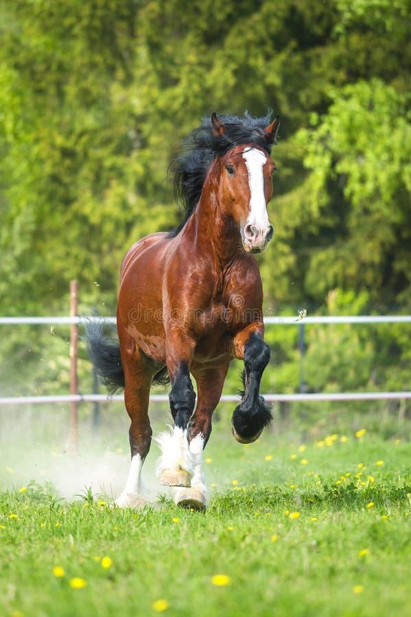 Podpalani Vladimir szkicu konia Ciężcy bieg galopują na łące obrazy royalty free