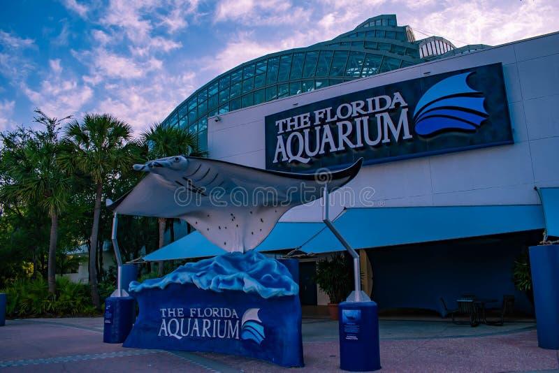 podpalany Florida Tampa Kwietnia 28, 2019 manty Ray w Floryda akwarium głównym wejściu zdjęcie royalty free