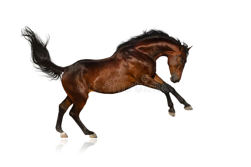 Podpalany koń zdjęcia stock