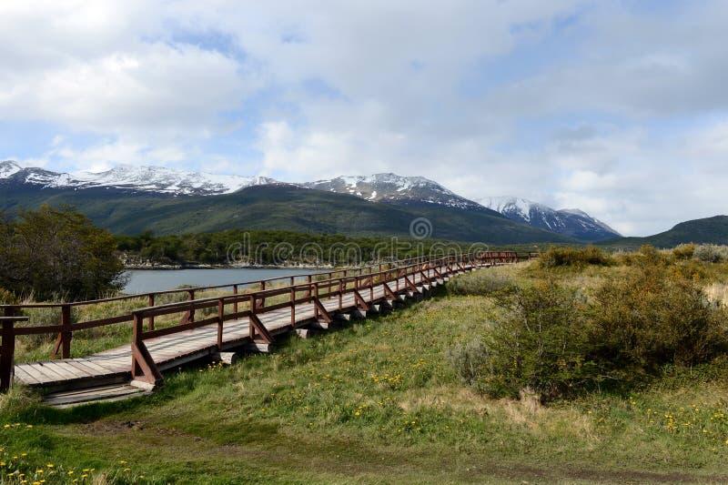 Podpalany Lapataia w parku narodowym Tierra Del Fuego obraz royalty free