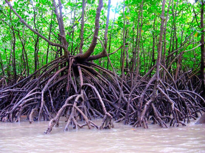 podpierający korzenie zdjęcie stock