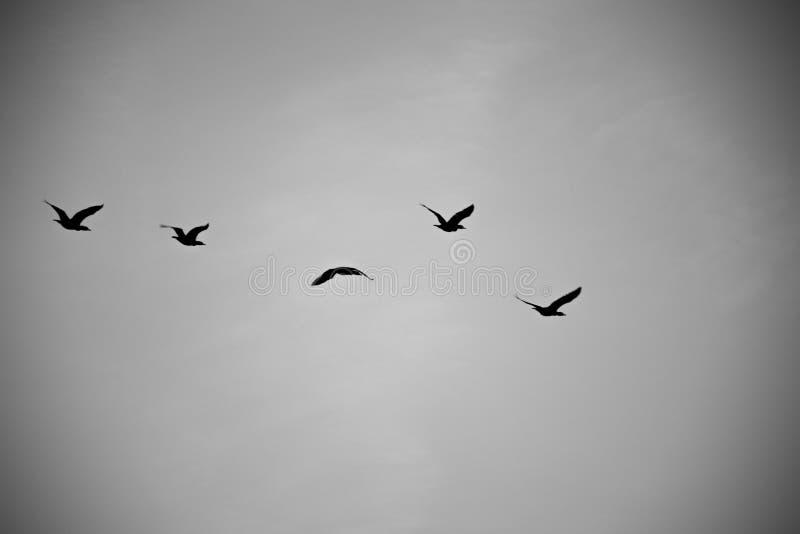 Podróżni ptaki zdjęcie stock