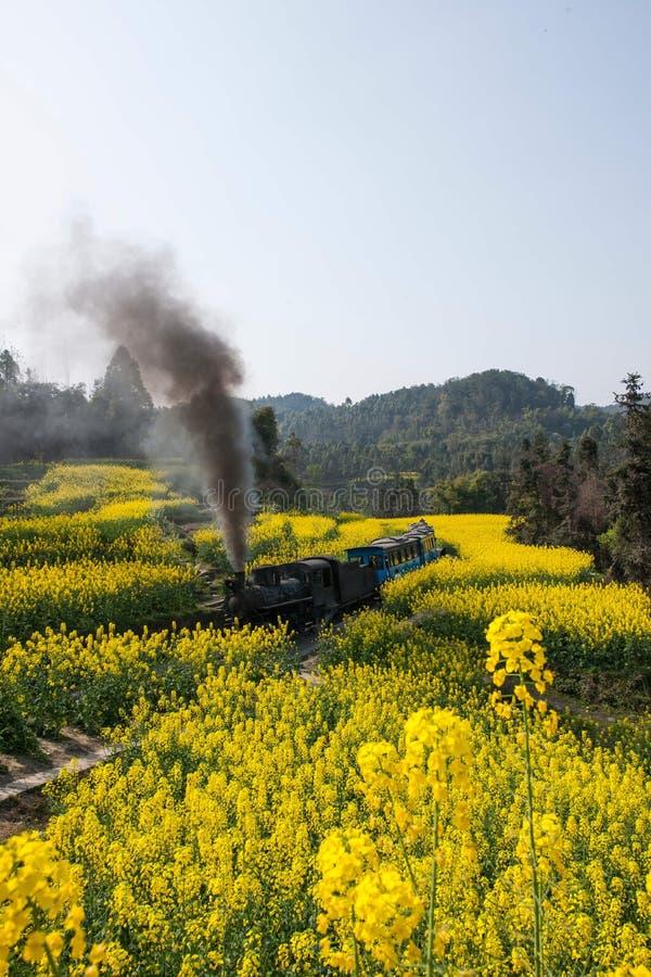 Podróżujący między Leshan miastem mały dworca canola, Sichuan Qianwei Ka Yan Yang pociągu pszczoły kwitną obrazy royalty free