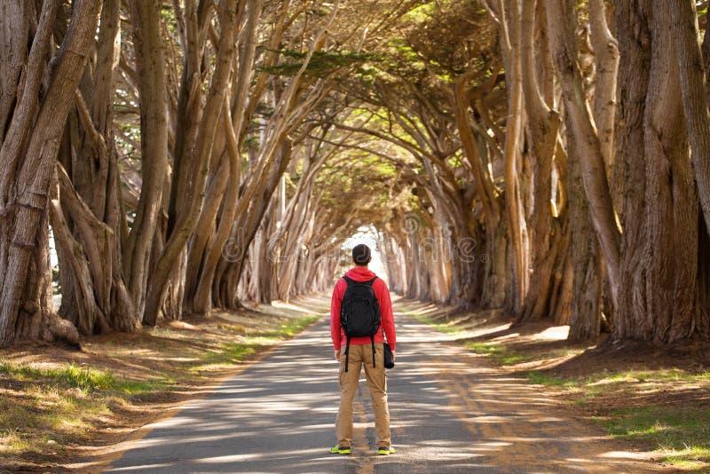 Podróżuje mężczyzny wycieczkowicza z plecakiem cieszy się Cyprysowego drzewa tunel, punktu Reyes Krajowy Seashore, Kalifornia, us zdjęcie royalty free