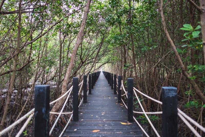 Podróżuje tło pięknej natury drewnianego most w lesie z fotografia royalty free