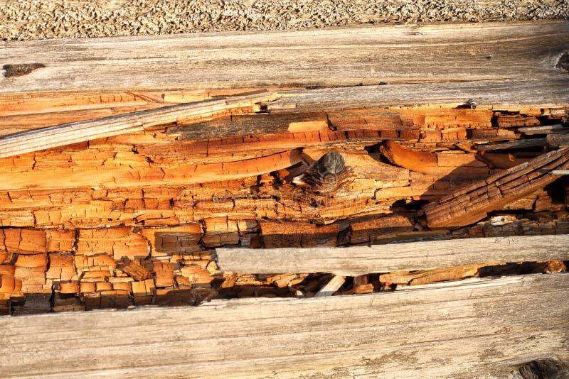 Podridão na madeira inoperante imagens de stock
