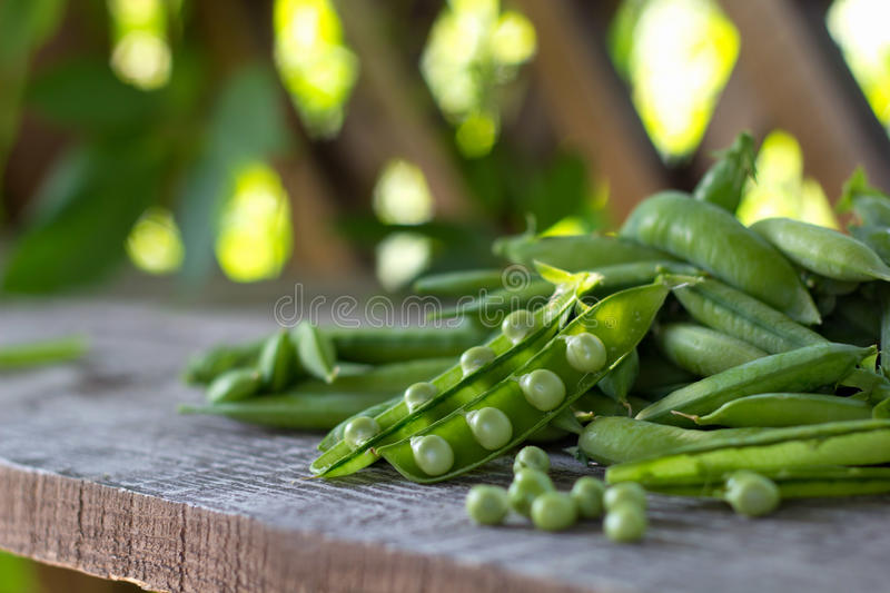 Pods of young green juicy peas royalty free stock image