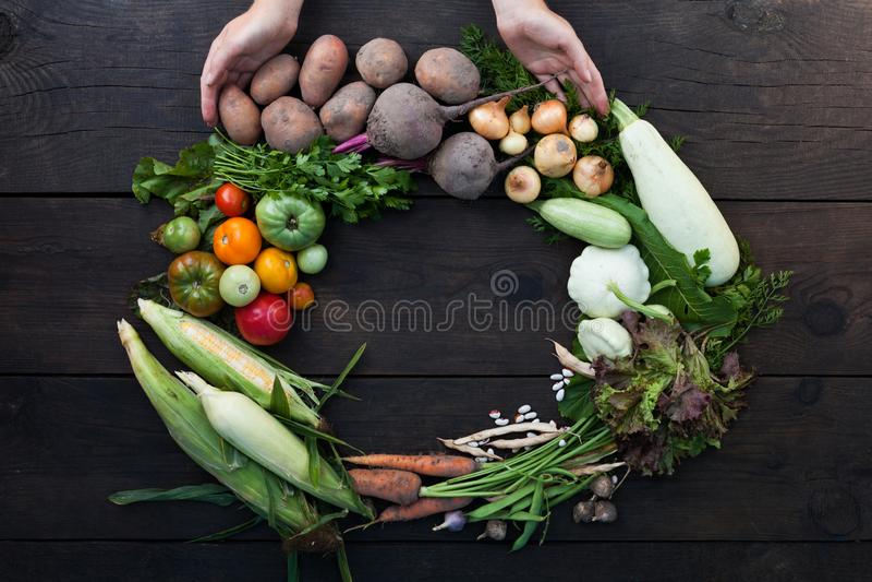 Podtrzymywalny średniorolny żniwo, rolnictw ogrodowi warzywa obrazy stock
