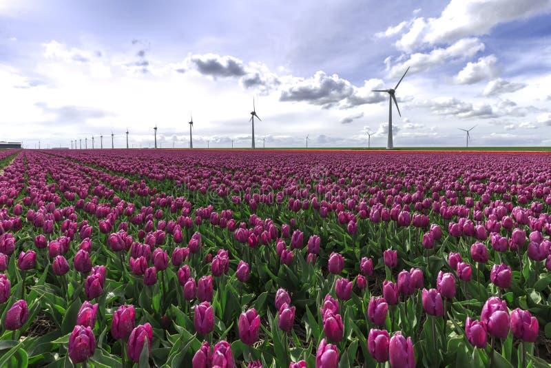 Podtrzymywalny energetyczny świat obraz stock