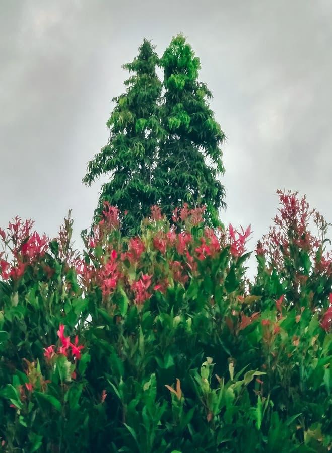 podwójne drzewa zdjęcia stock