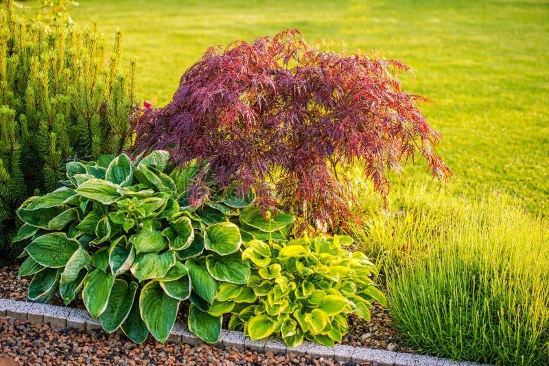Podwórko Ogrodowe rośliny obraz stock