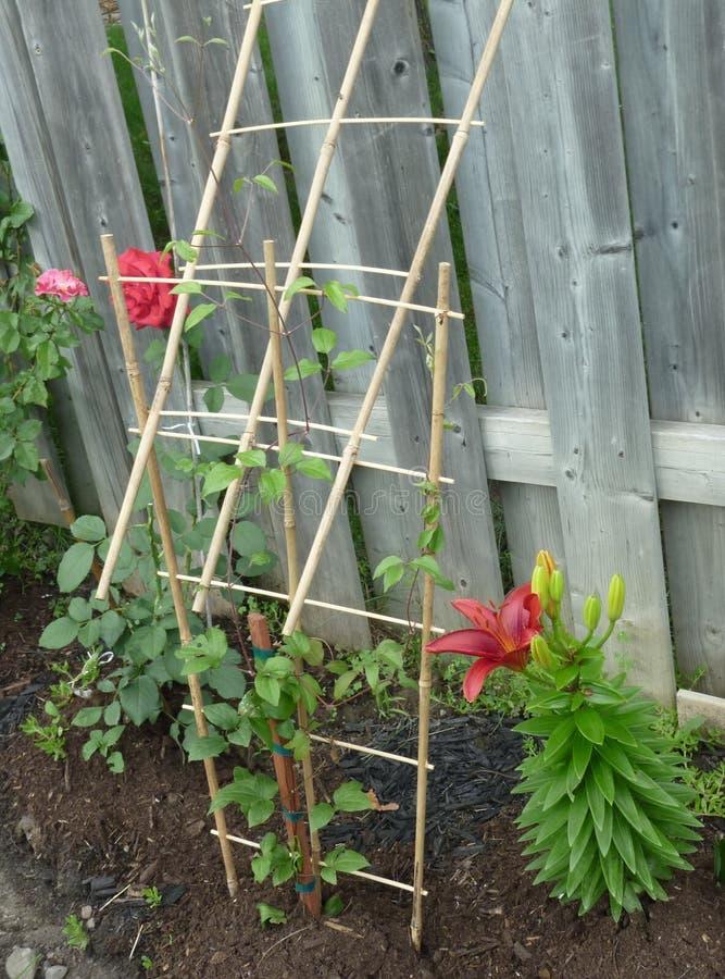 podwórza ogrodnictwo zdjęcie royalty free