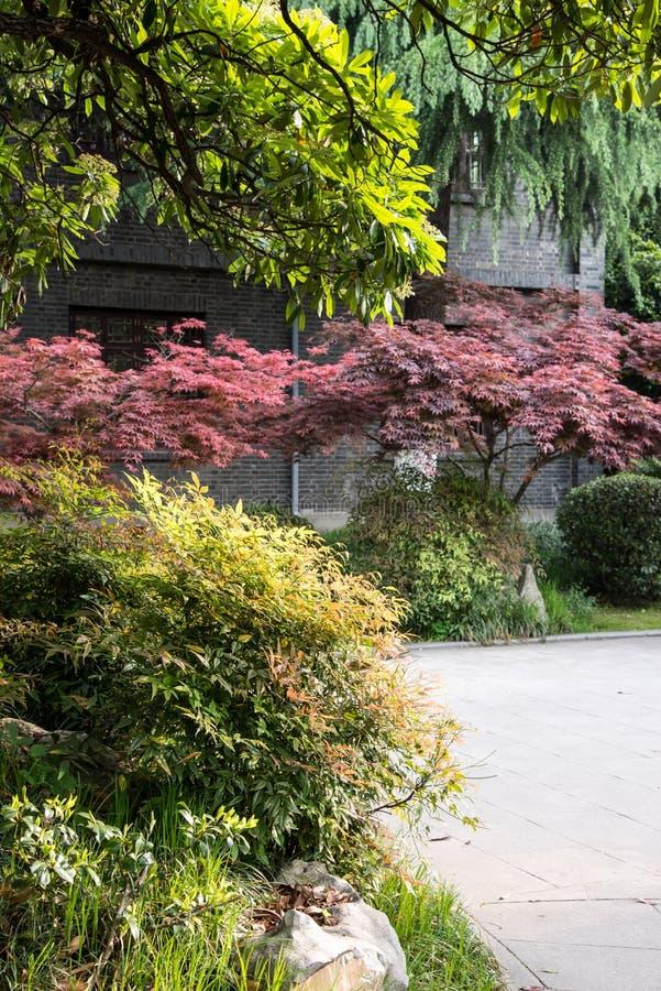 Podwórze ogród zdjęcie royalty free