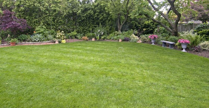 podwórzy drzewa zdjęcie royalty free