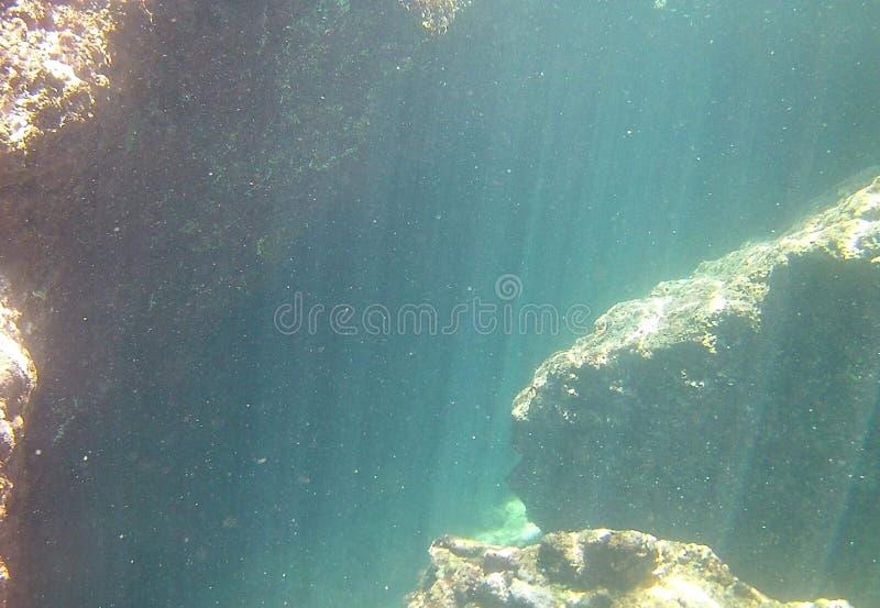 Podwodna ciekawość zdjęcia royalty free