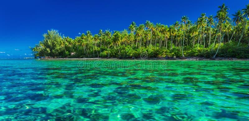 Podwodna rafa koralowa obok zielonej tropikalnej wyspy, Moorea, Tah obrazy royalty free