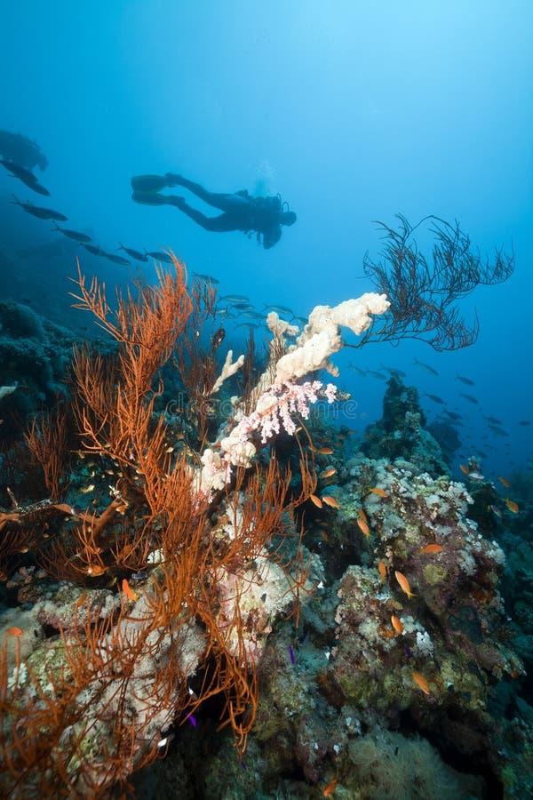 Podwodna sceneria i nurek w Czerwonym Morzu. zdjęcia stock