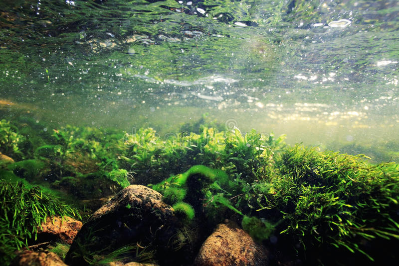 Podwodna scenerii czysta woda fotografia royalty free