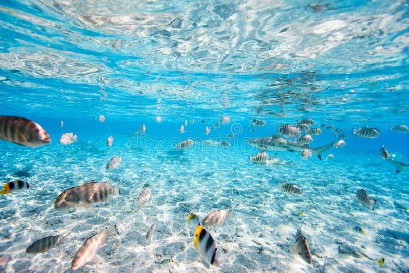 Podwodne bor Bory zdjęcia royalty free