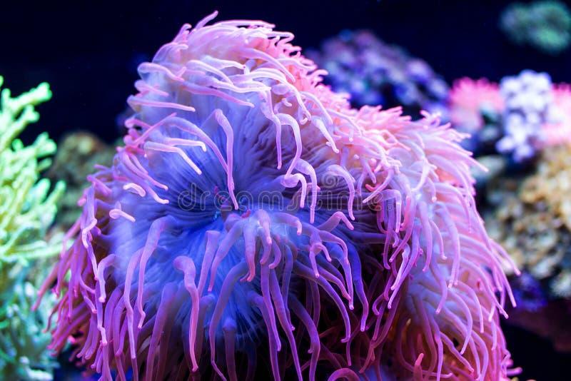 Podwodne denne rośliny bardzo kolorowe zdjęcie stock