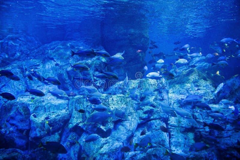 Podwodne istoty fotografia royalty free