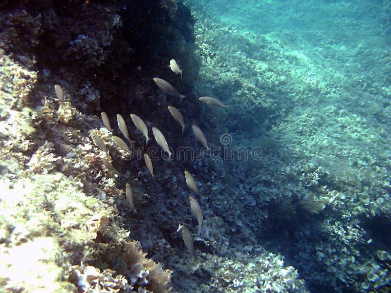 Podwodne serie fotografia stock