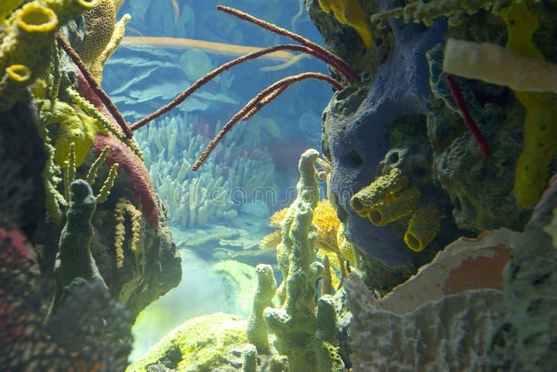 podwodny świat obraz stock