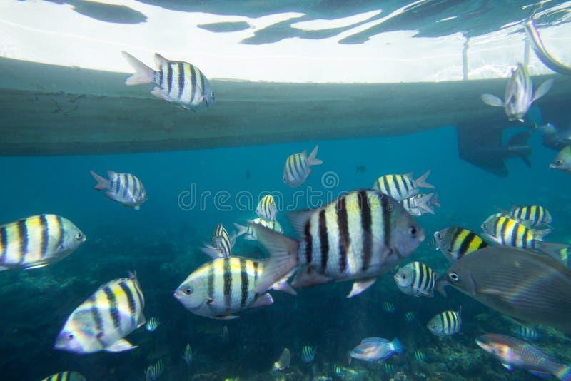 Podwodny życie morze karaibskie zdjęcie royalty free