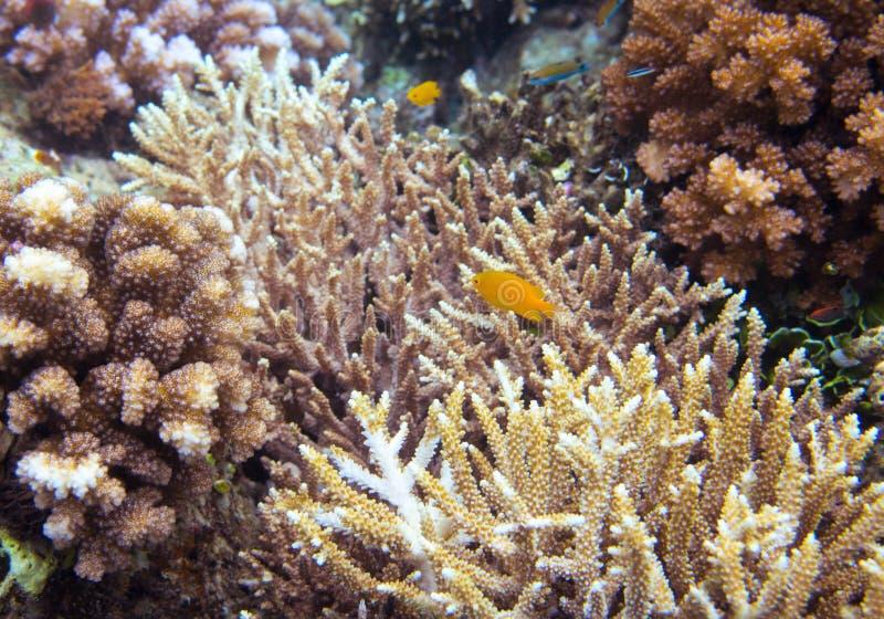 Podwodny krajobraz z kolor żółty ryba Dennego brzeg środowisko obraz stock