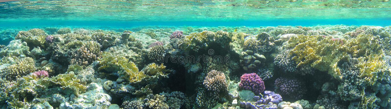 podwodny krajobrazu zdjęcie royalty free