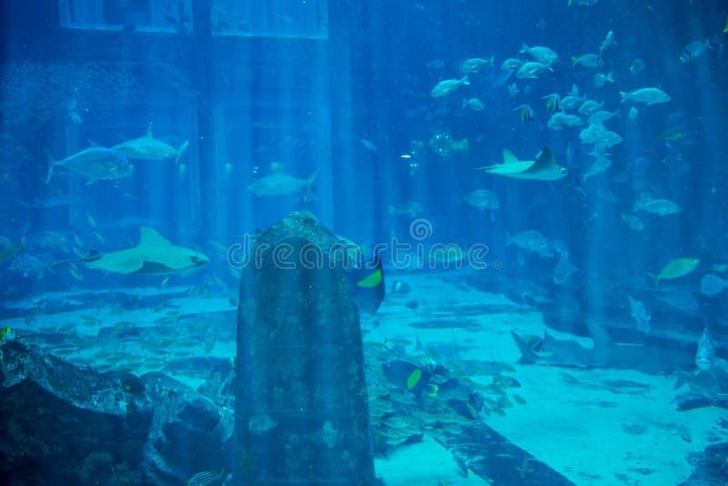 Podwodny rujnujący grodzki pełny tropikalna ryba obraz stock