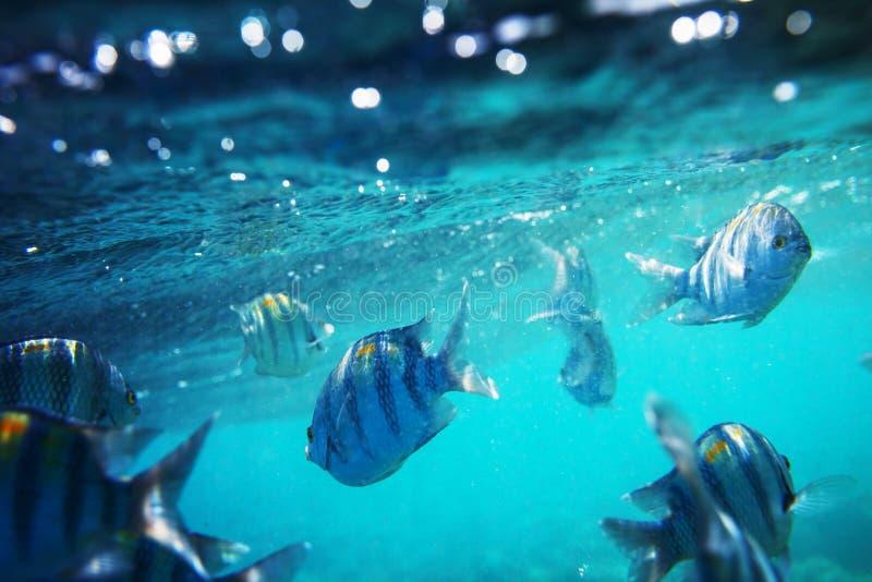 podwodny ryb obraz stock