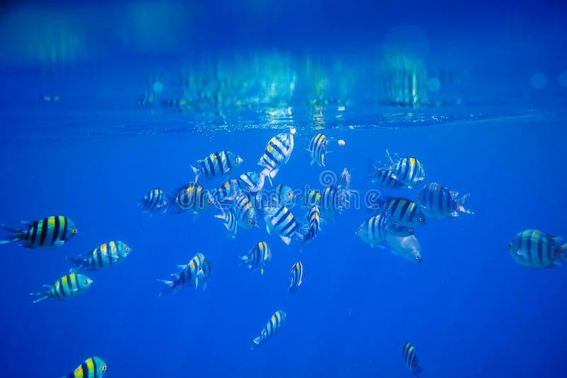podwodny ryb obrazy royalty free