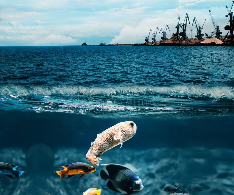 podwodny ryb tła opieki pojęcia środowisko odizolowywał małego wp8lywy drzewnego biel zdjęcie stock