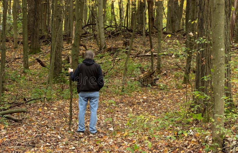 Podwyżka w drewnach zdjęcie royalty free