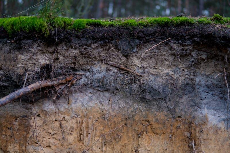 podzol土壤细节  库存图片