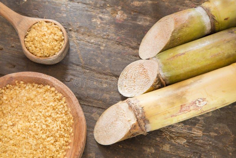 Poeder en suikerriet - Saccharum officinarum royalty-vrije stock afbeeldingen