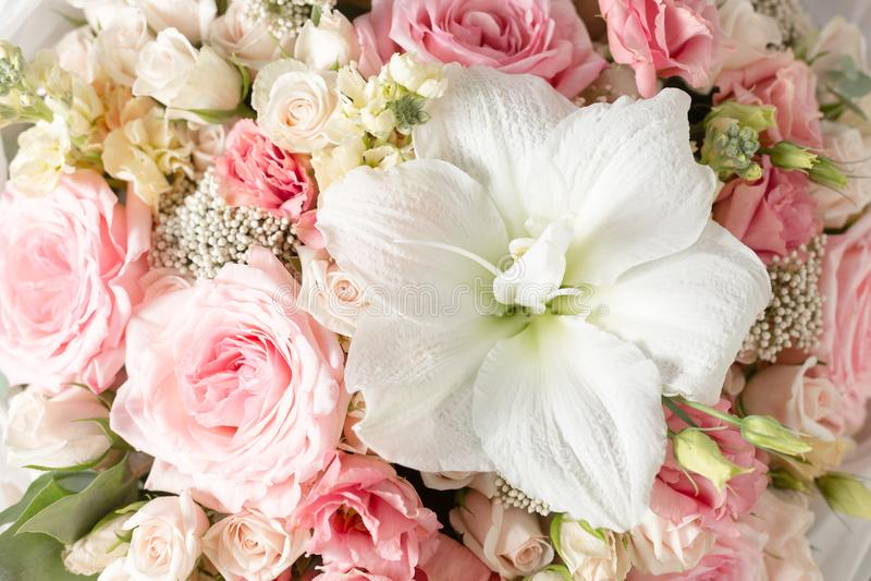 Poederachtige roze kleur De bloemtak nam, Knoppen, close-up toe royalty-vrije stock foto's