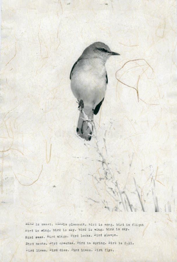 Poema do pássaro