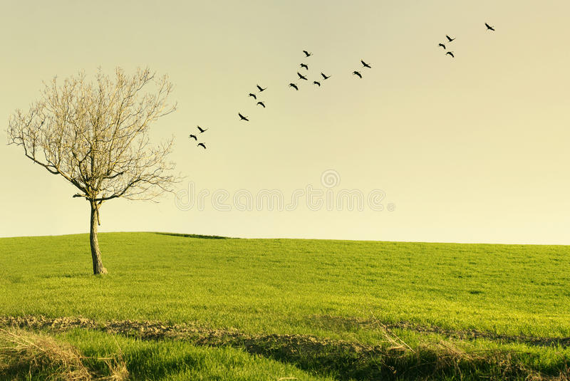 Poetic landscape at sunset. Beautiful poetic landscape with a tree in a meadow and birds flying at sunset royalty free stock photography