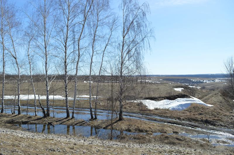 Poetic spring landscape with puddles and birch. Beautiful landscape with a little snow and tender gradient sky. Sunny weather stock photos