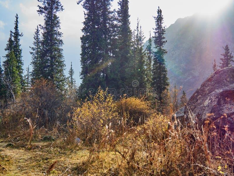Pogórza zakrywający z lasem, zaświecającym słońcem obraz stock